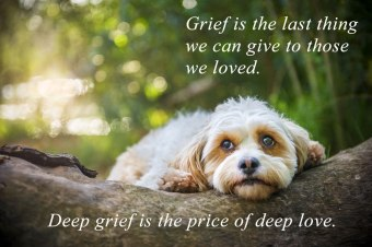 rory-grief-web