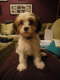 puppy 033